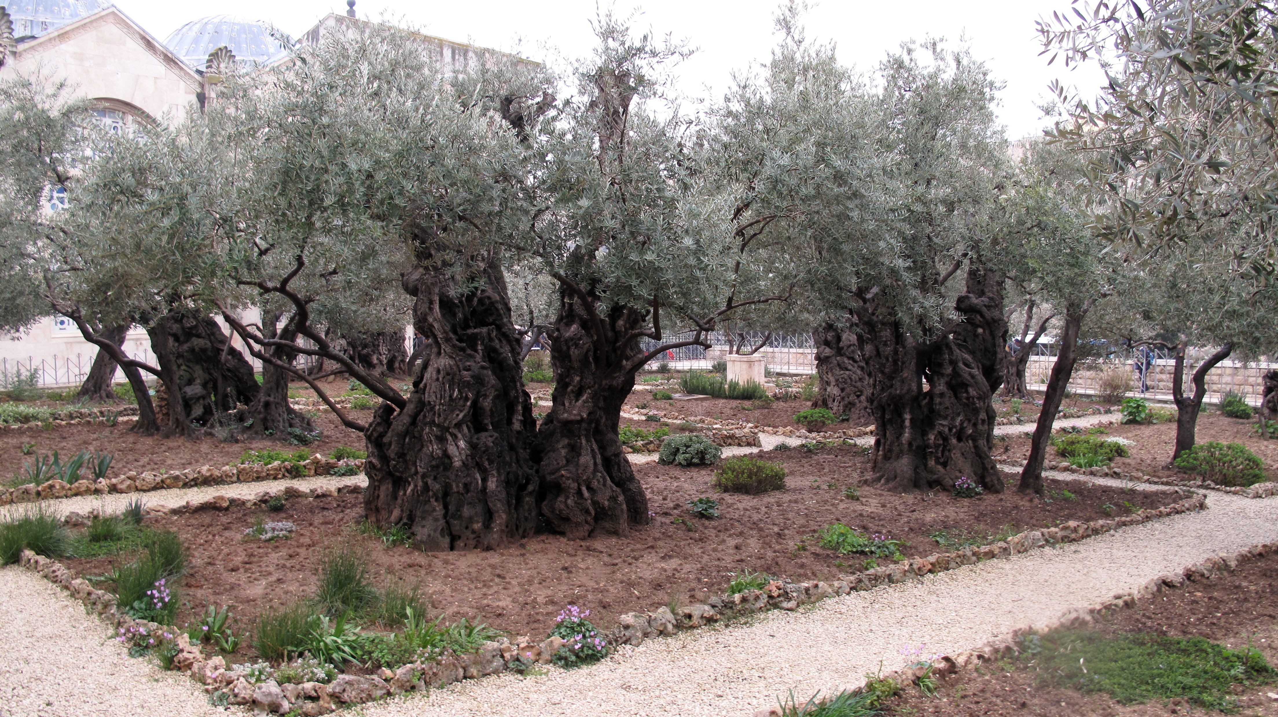 Church Of All Nations And The Garden Of Gethsemane